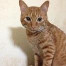 保護猫…子猫〜成猫まで沢山居ます。優しい家庭に引き取って貰いたいです。