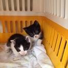 生後1ヶ月の子猫4匹
