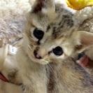 可愛い子猫ちゃん!3匹