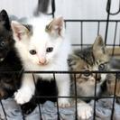 母猫&子猫3匹の新しいお家を探しています。
