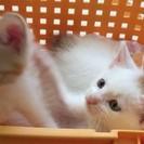 子猫3姉妹の里親募集です