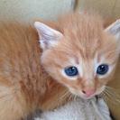 生後1か月未満の拾い子猫 2匹の里親募集