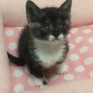 生後一ヶ月の猫ちゃん