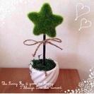 観葉植物♡1500円