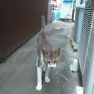 迷い猫の里親を探しています