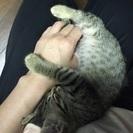 古賀市で2ヶ月の子猫