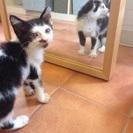 子猫の里親募集してます。