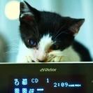 生後約3ヶ月の雄猫.可愛がってくださる方貰って下さい。