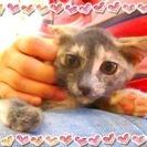 【里親募集】生後4ヶ月♀甘えん坊な仔猫ちゃん