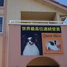 犬好きな従業員募集