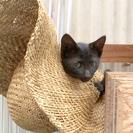 かわいい真っ黒猫さんです。