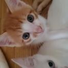 里親募集です。7月8日に子猫が産まれました!