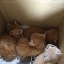 可愛い三匹の子猫ちゃんの里親募集