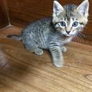 『代理』静岡県富士市と愛知県小牧市周辺で子猫の家族募集中