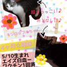 ☆愛らしい姉妹ニャンコ☆