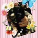 ☆猫大好きサビニャン☆