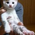 仔猫産まれました!