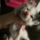 生後2週間の捨て猫保護中!