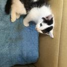 猫ちゃんの家族になってくれる方を探しています。
