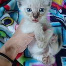 8月28日生まれの子猫です