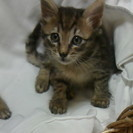 とても可愛い赤ちゃん猫貰ってニャン