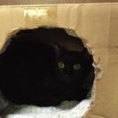 黒猫♂ 保護猫
