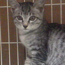 とても可愛い2か月の子猫貰ってニャン