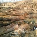 伐採木、薪求むm(__)m