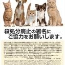 猫・犬殺処分ゼロの活動