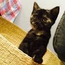 ☆猫カフェで遊んで晩御飯!週始めは猫ちゃんと遊んで癒されよう!