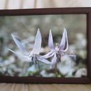 写真とフレーム(花)