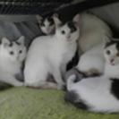 多頭崩壊のため沢山の猫達が行き場をなくしております。