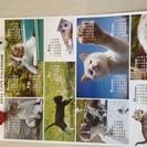 猫 カレンダー ポスター