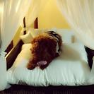 天蓋ベッド ペット用