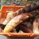 (シーズン終了しました。竹林保全活動ご協力ありがとうございました。...