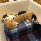 生後2週間位 子猫