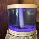 大型生簀 水槽 業務用