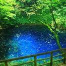 ガイドと行く白神山地 新緑のブナ林と神秘の青池、黄金色の不老ふ死温泉