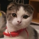 ☆猫カフェで!猫好きで集まるライトな友活パーティーを開催!