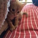 子猫の里親さんを探しています