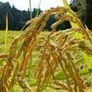 新米です!自家生産 お米 ひとめぼれ 30kg 玄米
