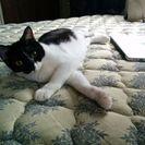 家庭の事情により飼うことの出来なくなってしまった猫達です