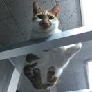 猫カフェオープン