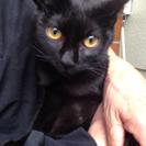 黒猫6カ月
