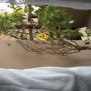 観葉植物 2mぐらい