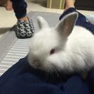 生後1カ月の子ウサギです!