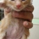保護ネコ 生後1ヵ月