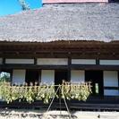 古民家の茅葺き屋根葺き替えボランティア