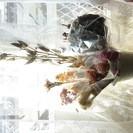ドライフラワー 花材1