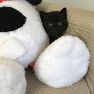 真っ黒の子猫ちゃんです。